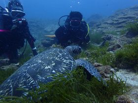 ハンパなく海が青い屋久島!ダイビングでウミガメや魚といっぱい遊ぼう!