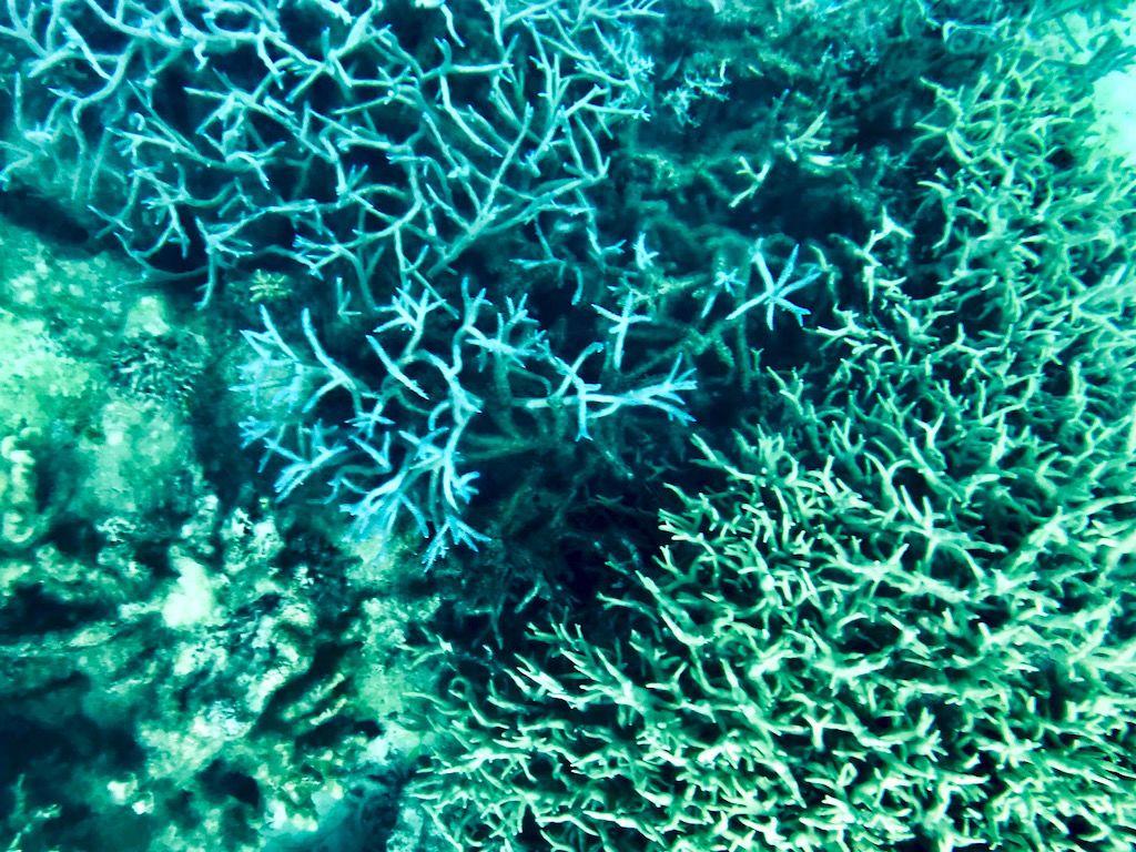 部屋から数歩でサンゴ礁の海へ。グラスボトムボートで海底散歩を楽しむ