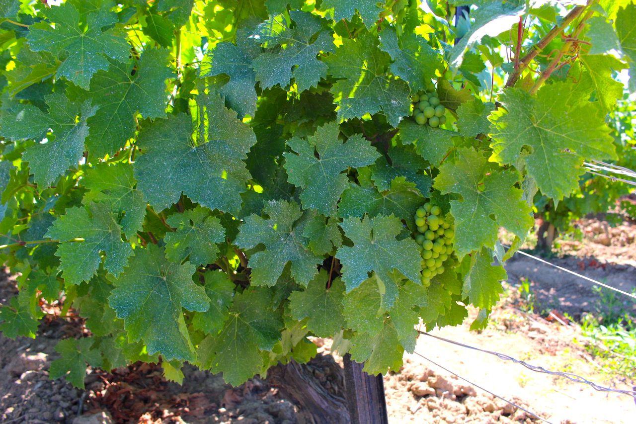 ナイアガラの自然が育んだ芳醇なアイスワイン
