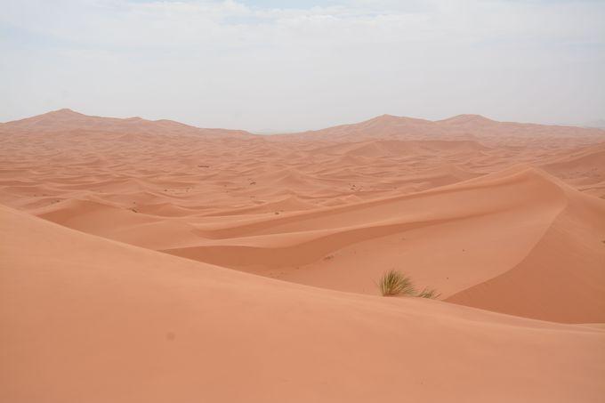 砂漠で過ごす一夜は忘れられない経験になる!