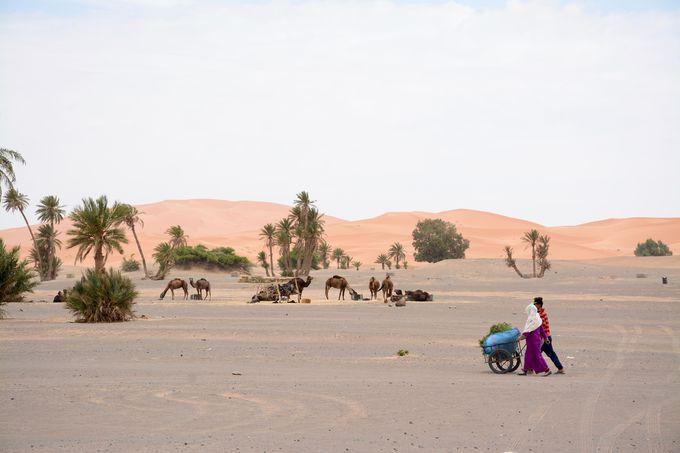 サハラ砂漠に面したメルズーガの村