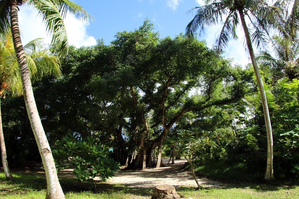 神々しいガジュマル大樹の前で写真撮影