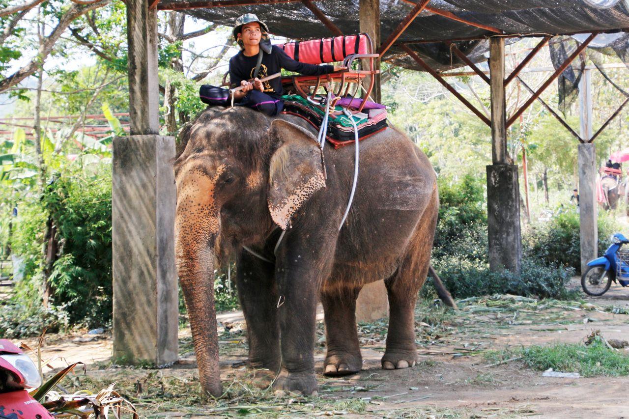 初めてのタイ・プーケットは、象乗り体験へ