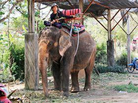 bc81a5a44f19 タイの動物の海外旅行・観光ガイド | LINEトラベルjp 旅行ガイド