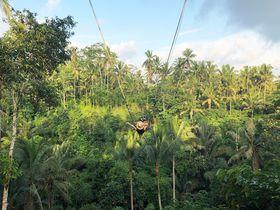 バリの絶景ブランコとコピ・ルアックを一緒に!ウマ・パケルで効率観光