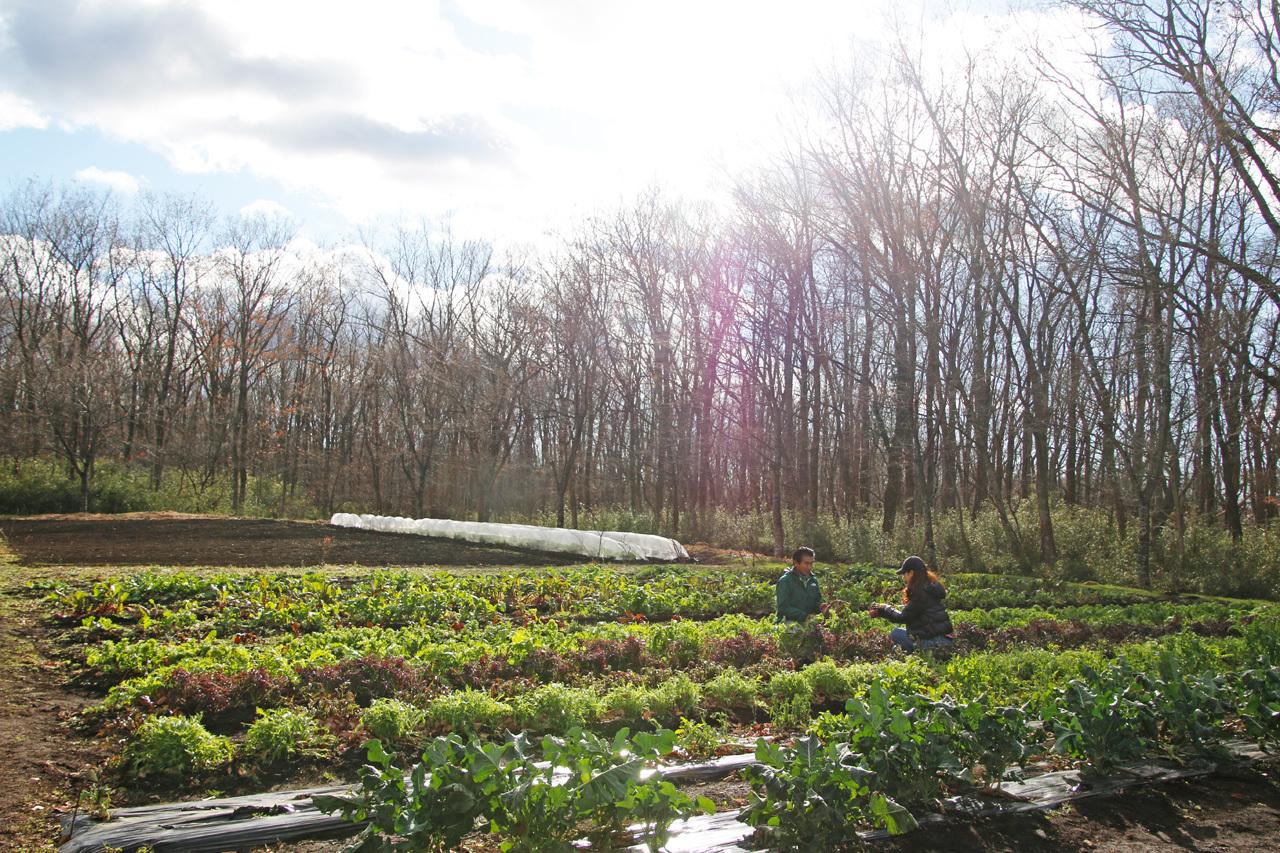 採れたて野菜を畑から。星野リゾート リゾナーレ那須とは