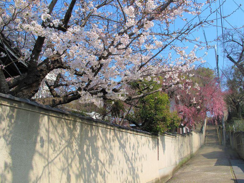 大阪「天王寺七坂」小説の舞台を歩く。しょうみの街