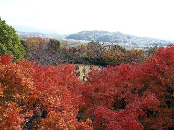 桜・紅葉、大パノラマが広がるカフェテラスで過ごす優美な時間