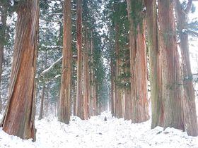 長野「戸隠神社 中社・奥社参道」冬こそ行きたい!雪に包まれる神域