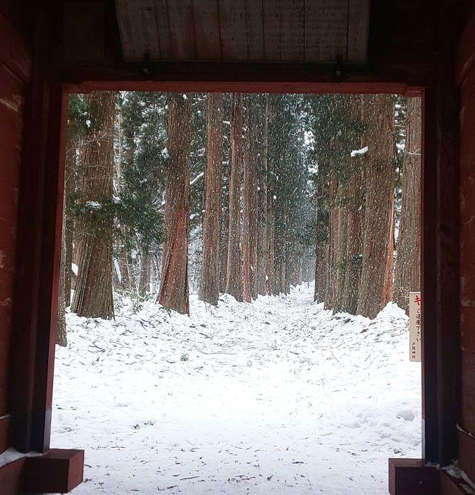幻想的な雪景色 杉並木がつづく参道