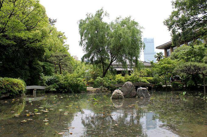 フォトジェニック!?遠くにハルカスを望む現代の「極楽浄土の池」