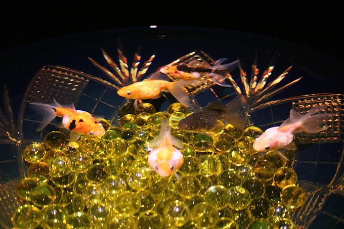 日本の伝統工芸と金魚