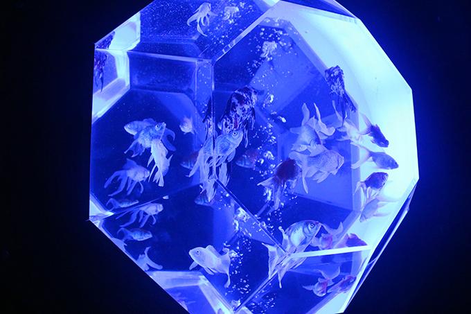 「アートアクアリウム展 〜大阪・金魚の艶〜」で2021年夏の思い出を