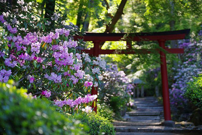 別名「花の寺」約3,000株もの石楠花群も