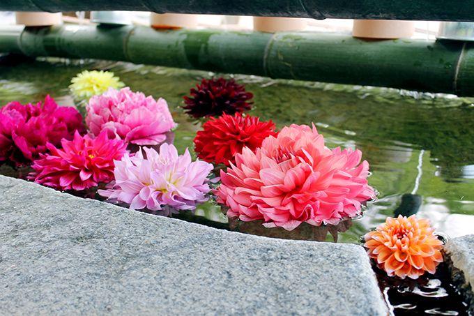 ここは極楽?大輪の花が咲く「華の池」