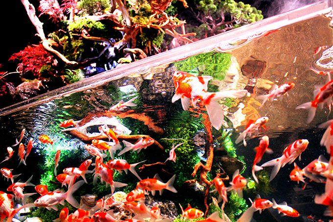 美しい金魚が舞い踊る太古の森