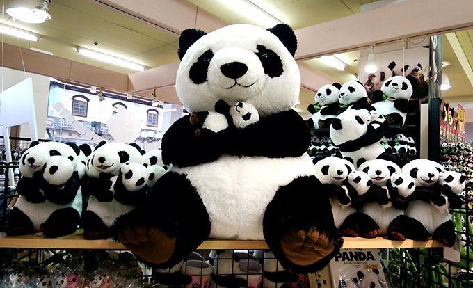 色んなパンダに会おう!