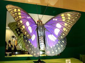 レッツ昆活!「特別展 昆虫」が2019年・大阪に来た!