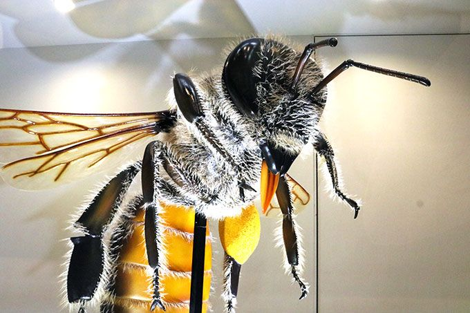 大迫力!巨大昆虫模型