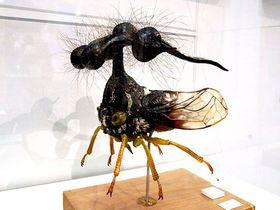 「特別展 昆虫」が2019年大阪に来た!展示&見どころをご紹介