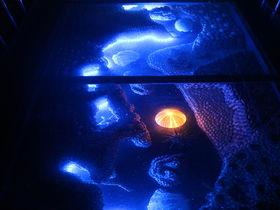 愛知「竹島ファンタジー館」で昭和レトロと映える写真を撮る