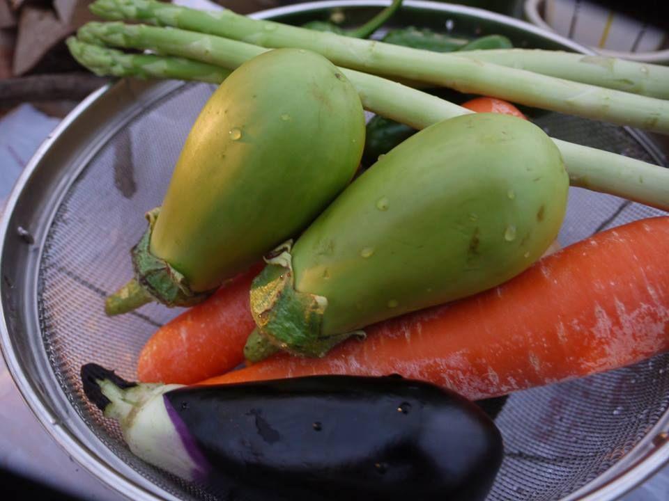 自分だけの畑で野菜を作っちゃおう!