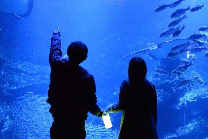 期間限定!京都水族館「冬の夜のすいぞくかん」
