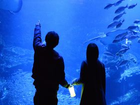 特別なバレンタインを。京都水族館「冬の夜のすいぞくかん」