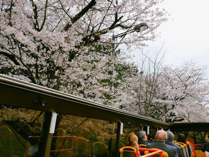 東京の名所を巡るシティコース