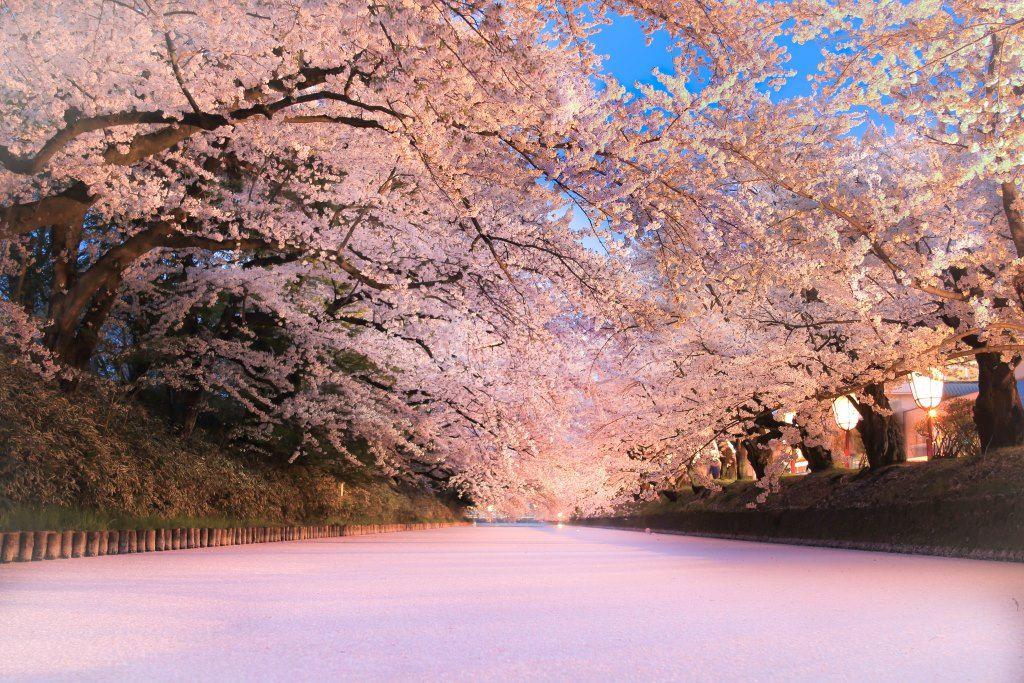 """弘前城に桜のじゅうたん""""花筏""""が!"""