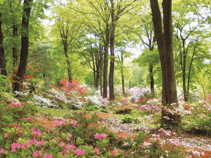 森林セラピーの基地「赤城自然園」でリラックス!