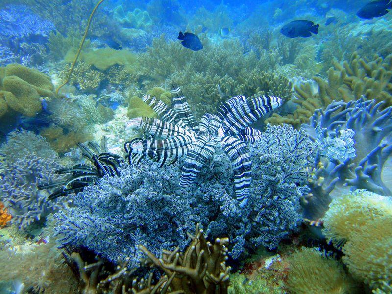 美しきコーラルガーデンと深海の生物たち