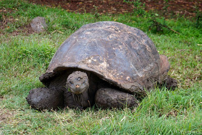進化論発祥の地「ガラパゴス諸島」についてのおさらい