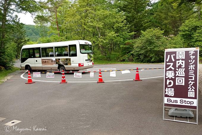 受付事務所からチャツボミゴケ公園までの移動について