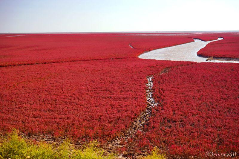 大地が燃える!奇跡のレッドビーチ「紅海灘風景区」