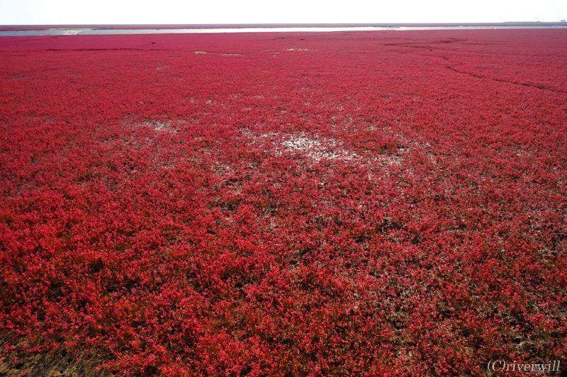 真っ赤に燃えるシーズンはわずか1か月間!その赤さの理由とは?