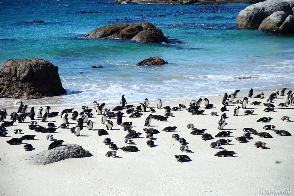 ペンギン・ダチョウにワイルドフラワー!世界遺産・テーブルマウンテン国立公園
