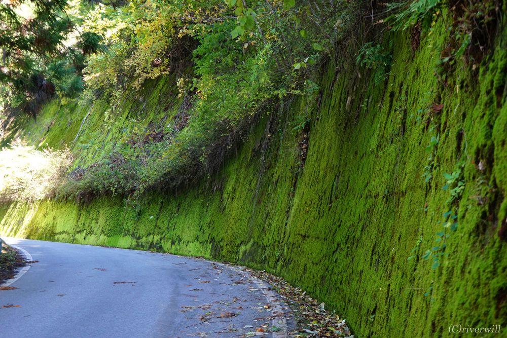 下栗の里から国道152号線に出るまでの道のりも楽しい
