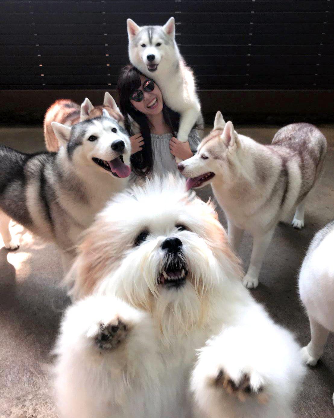 バンコクに犬カフェ!?「TrueLove@Neverland」は犬好き必見モフリ天国