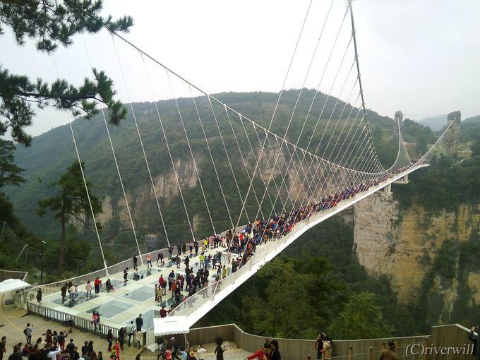 世界最長のガラスの吊り橋が人気の張家界大峡谷