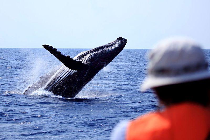 座間味島おすすめ観光スポット10選 ケラマブルーの海を満喫!