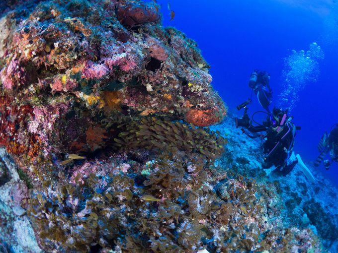 冬はクジラに夏は慶良間ブルー、世界が恋する座間味の海