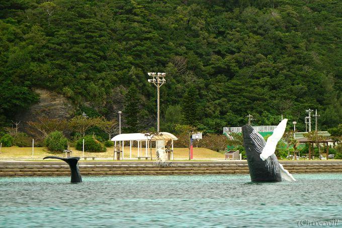 8.宝クジラ
