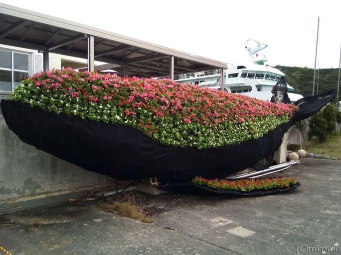 天候悪化で船が欠航したら村のクジラを探しに行こう