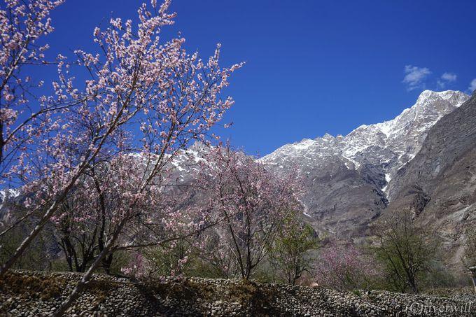 四季折々の美しい姿を見せる桃源郷フンザ