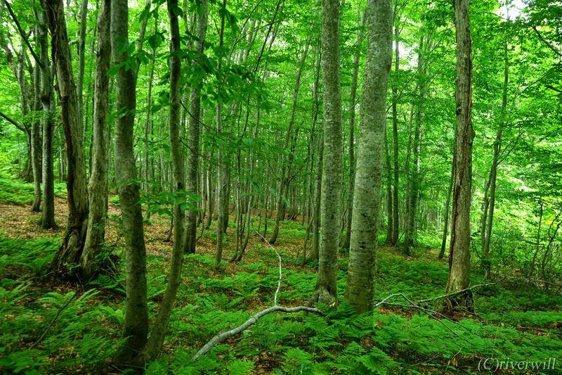白神山地のオススメ観光スポット10選 広大な世界自然遺産を満喫