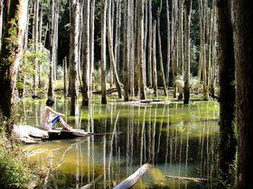 地震で生まれた神秘の森!台湾の秘境「忘憂森林」