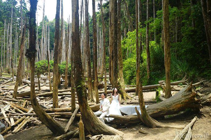 幻想的なたたずまいの神秘の森「忘憂森林」