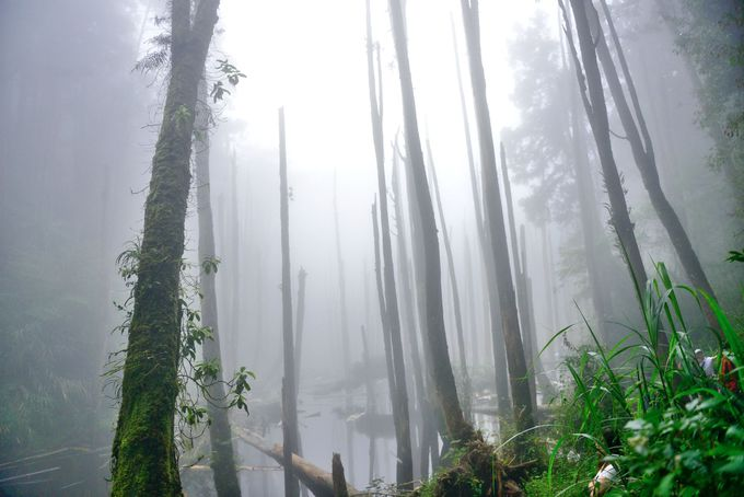 地震で生まれた奇跡の森「忘憂森林」