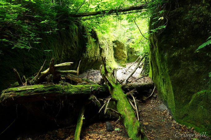 いよいよ緑のベールに包まれた天然回廊!「苔の回廊」